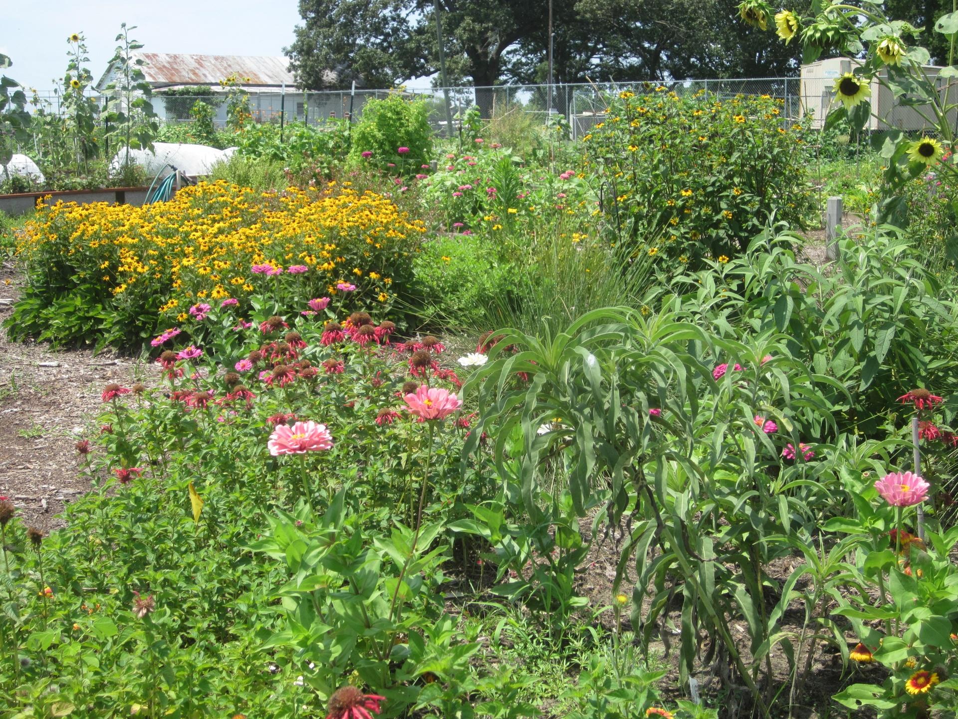 Welcome garden in summer